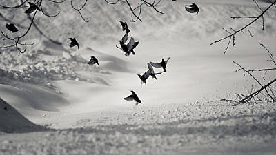 Of Birds Photograph - Discord by Photography by SPL