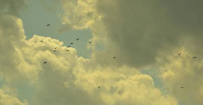 Photograph - Distant Birds by Naomi Berhane