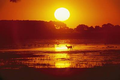 Distant Deer Silhouetted In A Marsh Art Print by Amy White & Al Petteway