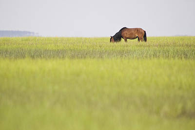 Photograph - Distant Wild Horse by Bob Decker