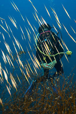 World Schooling Photograph - Diver Amongst A School Of Shrimpfish by Matthew Oldfield