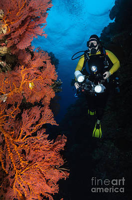 Animals Royalty-Free and Rights-Managed Images - Diver And Sea Fans, Fiji by Todd Winner