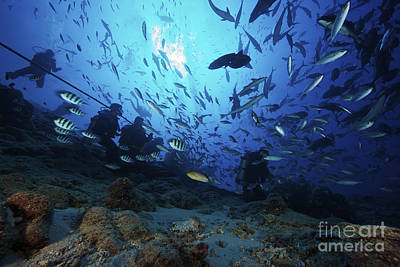 Photograph - Divers & Fish At Beqa Lagoons Premier by Terry Moore