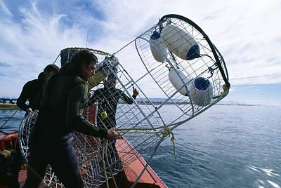 Surface Cage Diving Photograph - Divers Preparing A Shark Cage by Alexis Rosenfeld