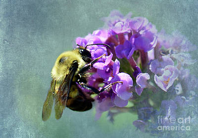 Bumble Digital Art - Diving In by Betty LaRue