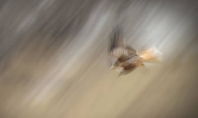Dumfries Photograph - Diving Kite by Andy Astbury