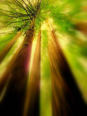 Photograph - Dizzy Tall Redwoods by Cindy Wright