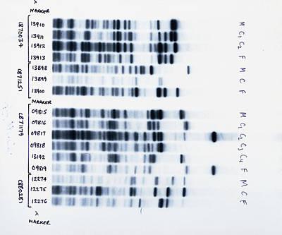 Dna Fingerprinting, Analysing Family Rela Art Print