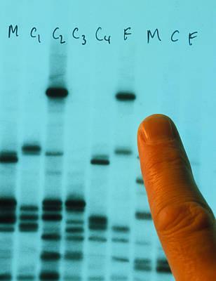 Dna Fingerprinting Used To Prove Paternity Art Print