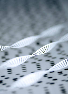 Heredity Photograph - Dna Helices by Lawrence Lawry