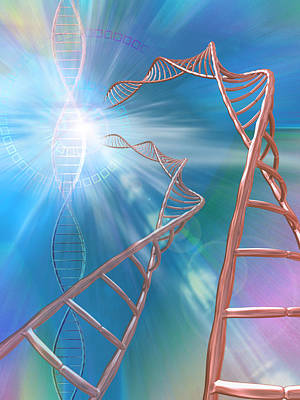 Heredity Photograph - Dna Helices by Pasieka