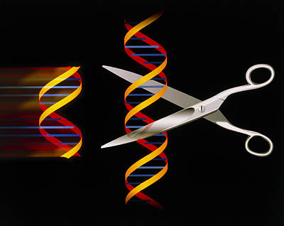 Dna Manipulation Art Print
