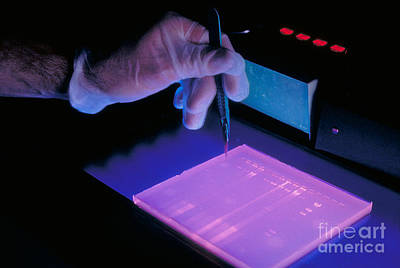 Dna Study Using Electrophoresis Art Print by Science Source