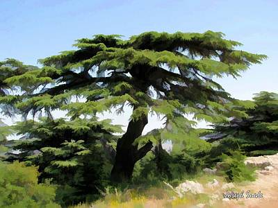 Do-00511 Cedar Forest Art Print by Digital Oil