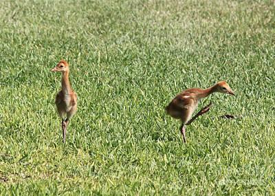 Baby Bird Photograph - Do The Happy Dance by Carol Groenen