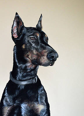 Dog Portrait Pastel - Doberman Cuda by Ann Marie Chaffin