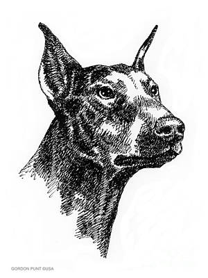 Drawing - Doberman-pincher-portrait by Gordon Punt