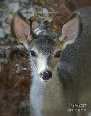 Photograph - Doe-eyed by Patrick Witz