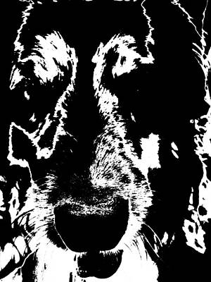 Photograph - Dog Abstract Black And White by Renate Nadi Wesley