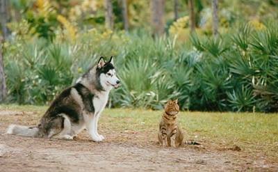 Photograph - Dog And Cat by Lynda Dawson-Youngclaus
