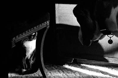 Photograph - Dog And Cat by Michael Mogensen