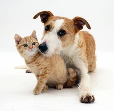 Lurcher Photograph - Dog And Kitten by Jane Burton