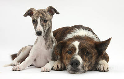 Brindle Photograph - Dog And Puppy by Mark Taylor