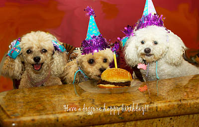Photograph - Dog Birthday Party by Diana Haronis