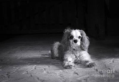 Dog Black And White Art Print