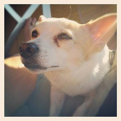 Pet Photograph - #dog #cute #pet #love #sun #sunshine by Mandy Shupp