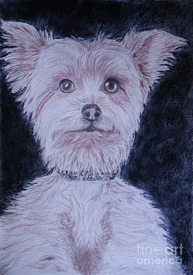 Wall Art - Drawing - York Dog by Cybele Chaves