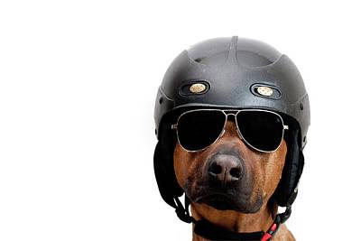 Dog Dressed As Police Man Art Print
