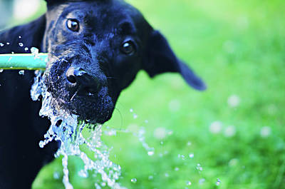 Dog Drinking From A Water Hose Art Print