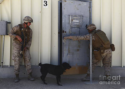 Photograph - Dog Handlers Conduct Improvised by Stocktrek Images