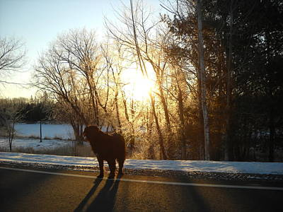 Photograph - Dog In Morning Sun by Kent Lorentzen