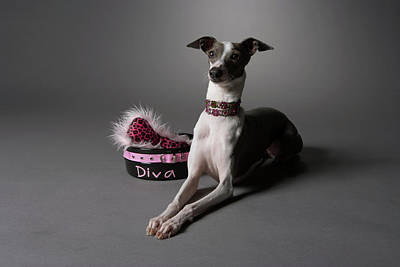 Dog In Sitting Position With Diva Bowl Art Print by Chris Amaral