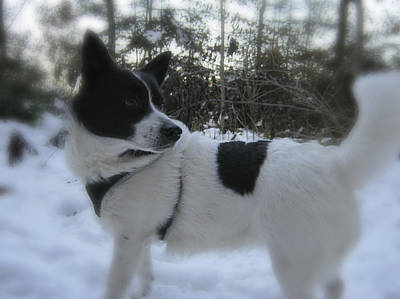 Fuzzy Digital Art - Dog In Snow - In Focus by Nafets Nuarb