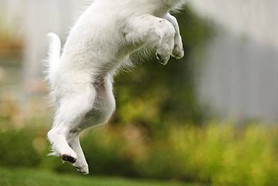 Dog Jumps Art Print by Richard Wear