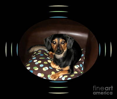 Dachshund Art Photograph - Dog On Sofa With Polka Dots by Renee Trenholm