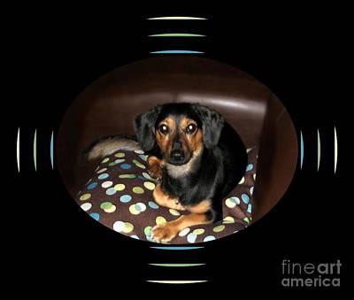 Dog On Sofa With Polka Dots Art Print by Renee Trenholm