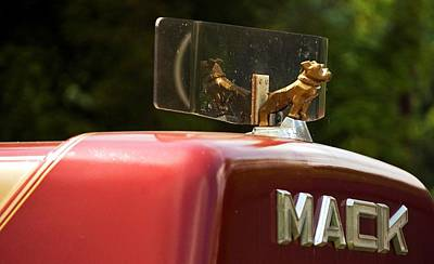 Photograph - Dog On Truck  by Elsa Marie Santoro