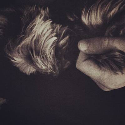 Pet Photograph - #dog #pet #love #yorkie by Torbjorn Schei