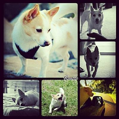 Pet Photograph - #dog #pet #puppy #collage #animallovers by Mandy Shupp