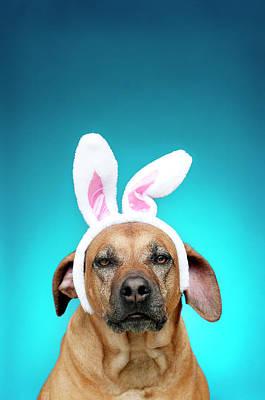 Dog Portrait Wearing Easter Bunny Ears Art Print by Jade Brookbank