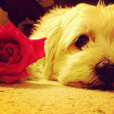 Angle Photograph - #dog #red #flower #angle #colorful by Jenna Luehrsen