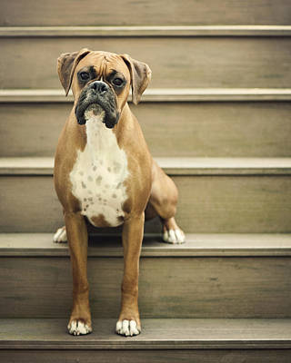Dog Sitting On Step Art Print by Jody Trappe Photography