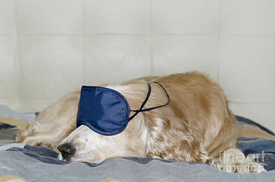 Dog Sleeping With A Sleep Mask Art Print by Mats Silvan