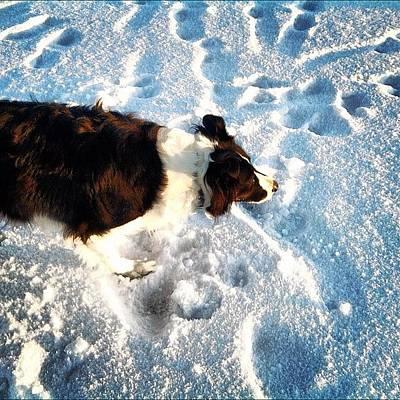 Sheep Photograph - #dog #snow #winter #lake #scotland by Dean Ferris