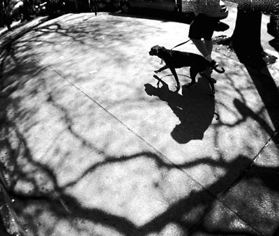 Photograph - Dog Walking In Brooklyn by Frank Winters