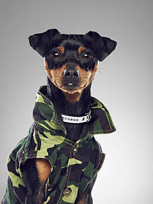 Y120831 Photograph - Dog Wearing Collared Jacket by 24frames